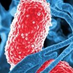 Chlamydia | Sexually transmitting bacterial infection